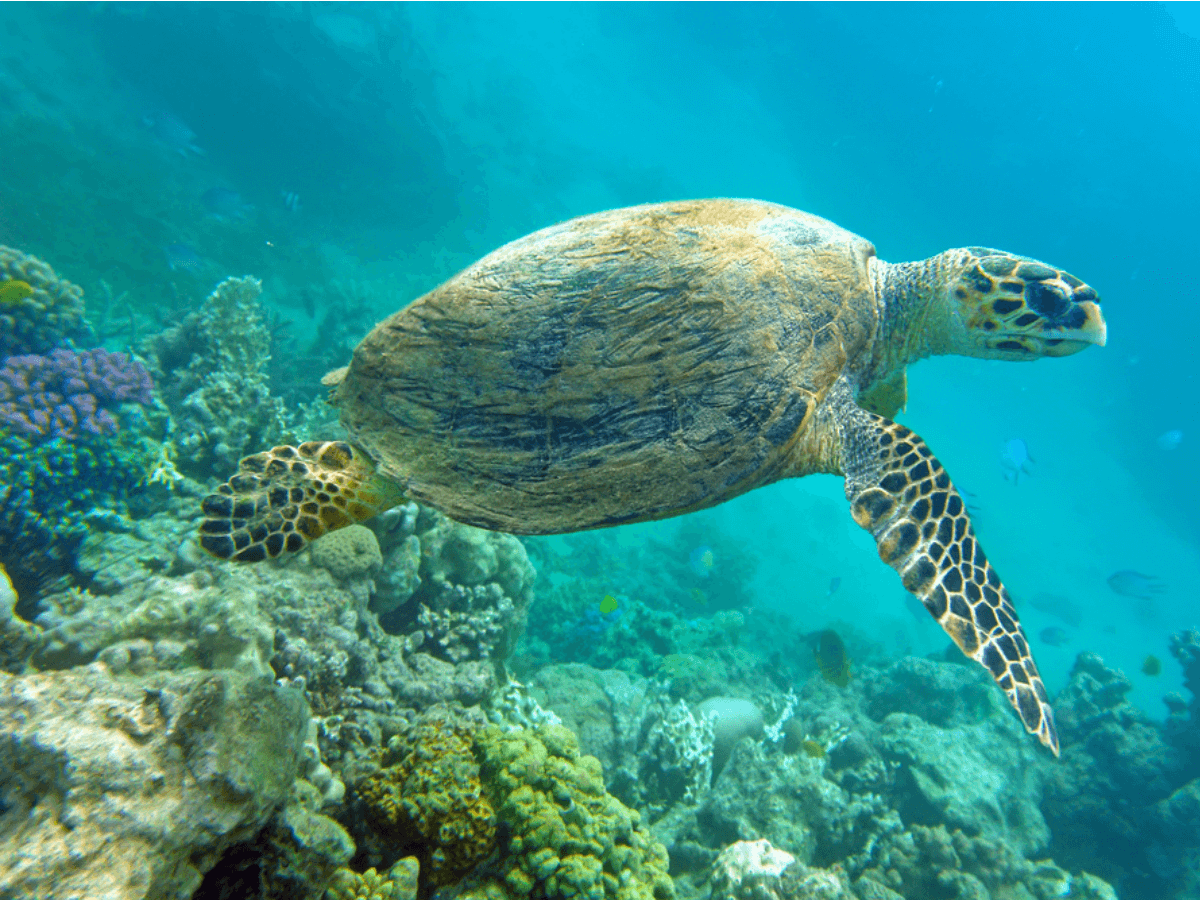 Volunteering with Sea Turtles :10 Things You Should Know