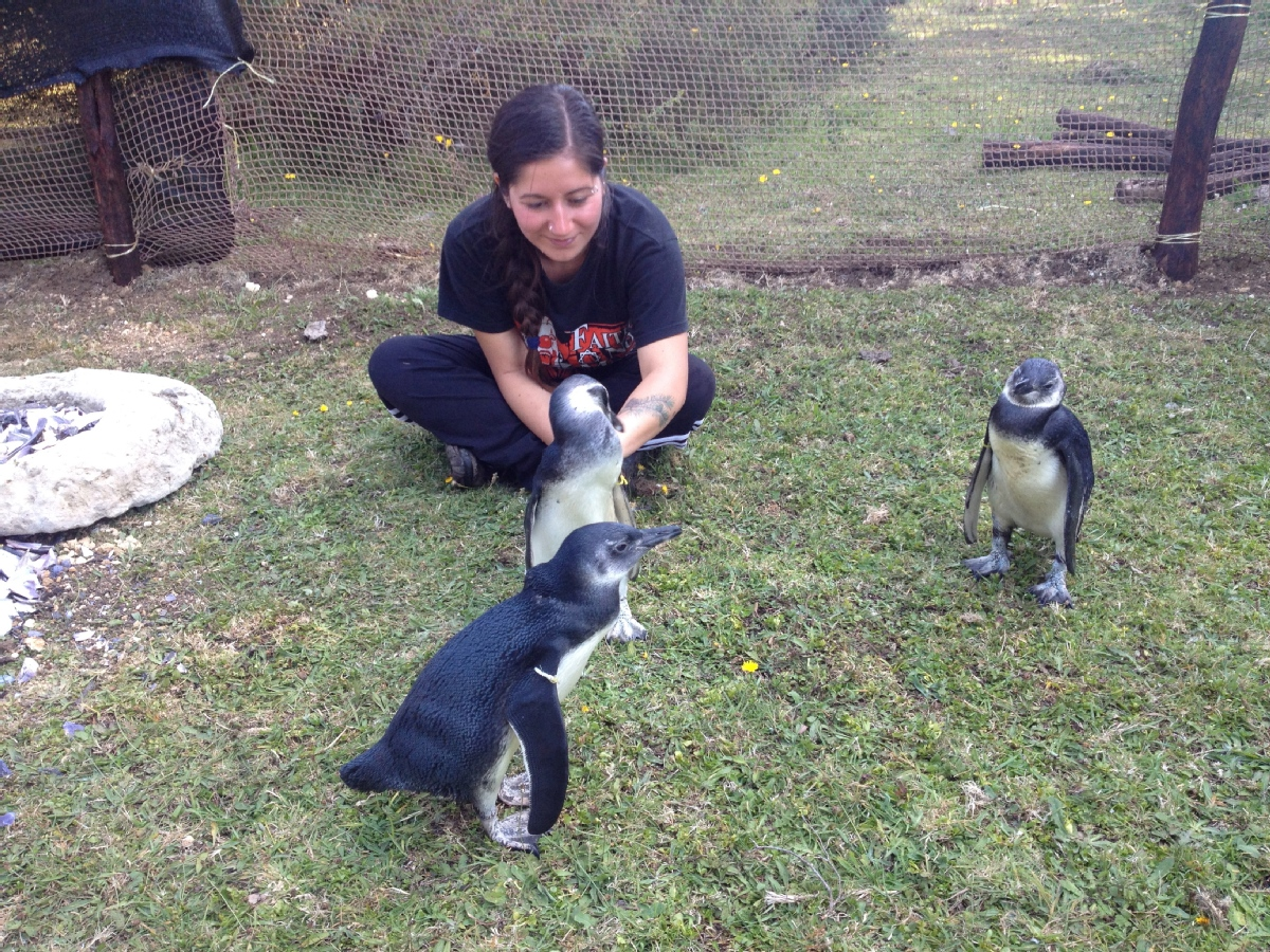 volunteer opportunities abroad holiday free budget chile conservation animals environment research