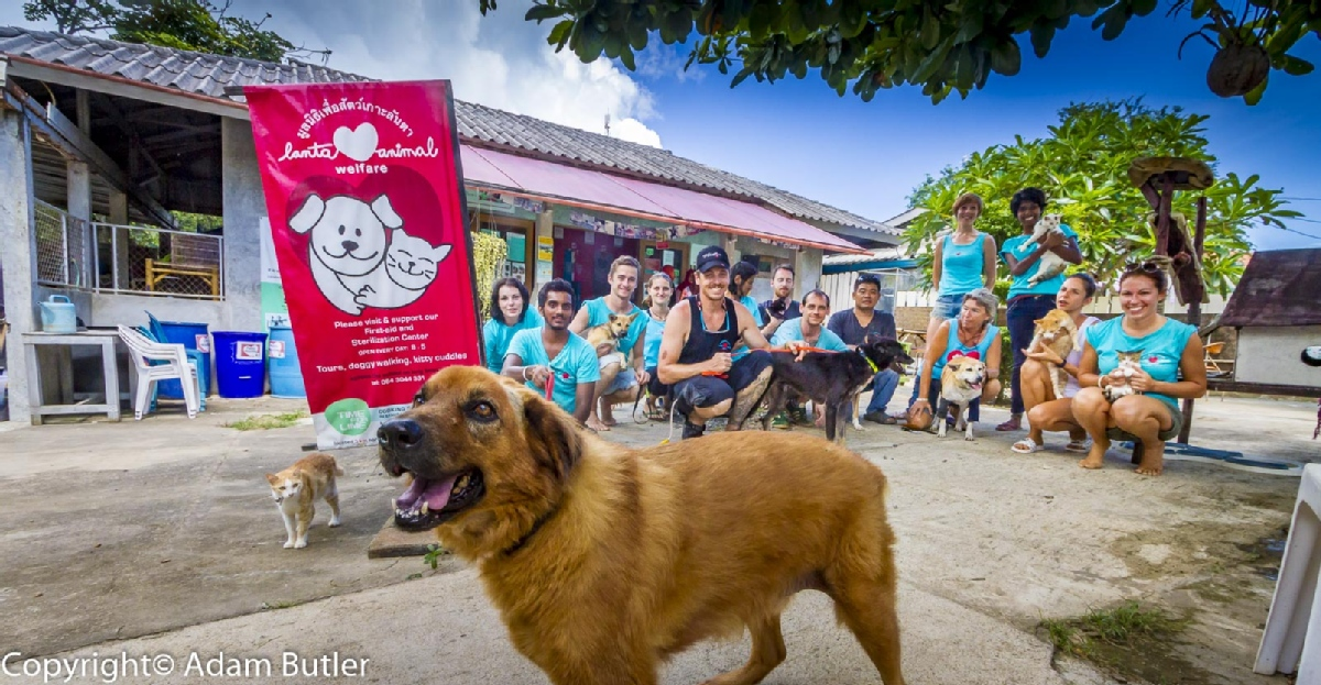 volunteer opportunities abroad holiday beach thailand animals stray dogs cats veterinarian vet students