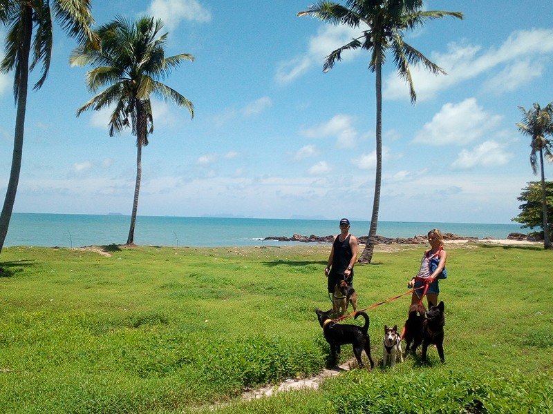 Lanta organization ngo volunteer opportunities programs projects abroad thailand southeast asia beach animals vet dogs cats